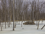 Beaver Lodge in an Icy Lake in the Spring, Quebec, Canada Photographic Print by Robert Servranckx