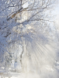 Sunbeams Through Branches Covered with Hoar Frost Photographic Print by Neal Mischler
