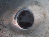 Eye of a Porbeagle Shark (Lamna Nasus), During Feeding The Porbeagle&#39;s Eye Rolls Back in its Socket Photographic Print by Andy Murch