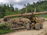 Rainforest Logging Near the Danum Valley Conservation Area, Sabah, Borneo, Malaysia Photographic Print by Thomas Marent