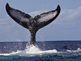 The Tail of Humpback Whale (Megaptera Novaeangliae) That Is Displaying, or Tail Lobbing Photographic Print by Marty Snyderman
