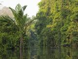 Rainforest and Stream, Tortuguero National Park, Costa Rica Papier Photo par Mary Ann McDonald
