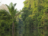 Rainforest and Stream, Tortuguero National Park, Costa Rica Photographic Print by Mary Ann McDonald