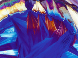 Sodium Thiosulphate Crystal Thin Section, LM, Polarized Photographie par George Musil