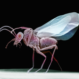 Lateral View of a Wasp, SEM Photographic Print by David Phillips