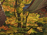 Roof Lines and Fall Maples, Tongdo Temple, South Korea Photographic Print by Geoffrey Schmid
