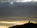 Cheetahs (Acinonyx Jubatus) Resting on a Hill at Dusk Photographic Print by Joe McDonald