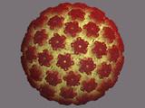 Human Papilloma Virus Capsid Photographic Print by Jean-Yves Sgro