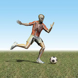 Soccer Player with Visible Skeleton Photographic Print by Carol & Mike Werner