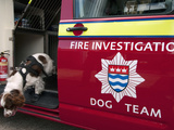 Fire Brigade Arson Investigation Dog Photographic Print by Louise Murray