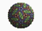 Hepatitis E Protein Capsid, Virus-Like Particle of Genotype 3 Photographic Print by Jean-Yves Sgro