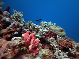 Orange and Red Fluorescent Pigments are Visible on the Reef Below 15 Meters Depth Photographic Print by Louise Murray