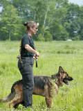 K9 Police Officer Training a German Shepherd as a Cadaver or Corpse Dog Photographic Print by Louise Murray