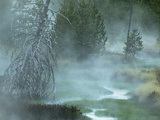 Stream and Fog in a Marshy Area in the Forest of Yellowstone National Park, Montana, USA Photographic Print by Joe McDonald