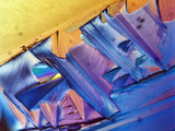 Tartaric Acid Crystals, LM X250, Polarized Photographic Print by George Musil
