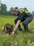 K9 Police Officer Training a German Shepherd Dog as a Cadaver or Corpse Dog Photographic Print by Louise Murray