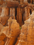 Bryce Canyon National Park, Utah, USA Photographic Print by Gustav Verderber