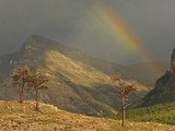 Rainbow and Sunbeam with Contorted Evergreens During a Stormy Afternoon Photographic Print by Geoffrey Schmid