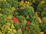 Aerial View of Fall Colors in a Deciduous Forest, Huron-Manistee National Forest, Michigan, USA Photographic Print by Jeffrey Wickett