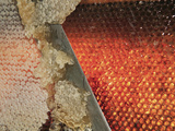 Small Honey Producers Still Use the Uncapping Knife to Prepare the Bee Hive Frames Photographic Print by Eric Tourneret