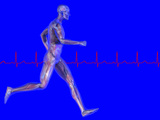 Runner, Male Likeness Showing Musculature and Skeleton Against an Ekg Photographic Print by Carol &amp; Mike Werner