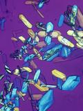 Estrone Estrogen Crystals, Polarized, LM X20 Photographic Print by Arthur Siegelman