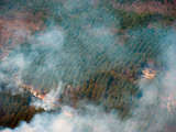 Prescribed Burn on the Huron-Manistee National Forest, Michigan, USA Photographic Print by Jeffrey Wickett