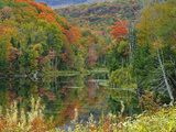 Forest and Pond in the Fall, Green Mountains, Vermont, USA Photographic Print by Gustav Verderber