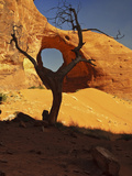 Ear of the Wind Arch Viewed Through a Dead Tree, Monument Valley Tribal Park, Arizona, USA Photographic Print by Gustav Verderber
