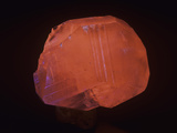 Calcite Photographed under Short-Wave Ultraviolet (Uv) Light and Fluorescing, Russia Photographic Print by Mark Schneider