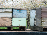 Bee Hives on Flat Bed Truck Parked Near a Cherry Orchard Photographic Print by Jeffrey Wickett