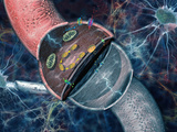 Concept of Electrical and Chemical Activity in Neurons Electrical Impulses Photographic Print by Carol & Mike Werner
