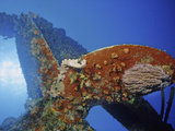 Marine Life Colonizing the Prop at the Stern of the Hilma Hooker Shipwreck, Bonaire, Caribbean Photographic Print by David Wrobel