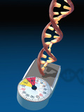Biomedical Illustration of a DNA Molecule on a Bathroom Scale Illustrating Photographic Print by Carol & Mike Werner