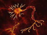 Illustration of a Neuron with a Damaged Myelin Sheath Photographic Print by Carol & Mike Werner