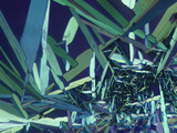Polarized View of Vitamin D2 Crystals, LM X65 Photographic Print by Arthur Siegelman