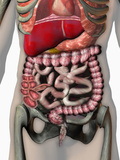 Biomedical Illustration of Crohn's Disease Photographic Print by Carol & Mike Werner