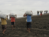 Sustainable Use of the Olive Ridley Sea Turtles (Lepidochelys Olivacea) Photographic Print by Solvin Zankl