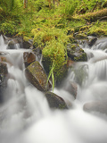 Cascading Stream and Spring Plant Growth in the Hoh Rain Forest, Olympic National Park, Washington Photographic Print by Geoffrey Schmid