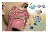 Illustration of the Human Head Showing the Mouth, Nose, and Throat Illustrating Allergy Symptoms Giclee Print by Carol & Mike Werner