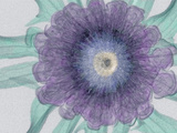 X-Ray of a Flower Photographic Print by George Taylor