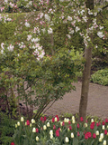 Garden with Flowering Crabapple Tree (Malus Zumi) Photographic Print by Phillip Smith