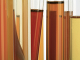 The Various Colors of Honey in Test Tubes Indicate their Origin Photographic Print by Eric Tourneret