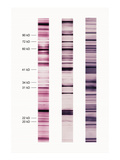 Western Blot Test Illustration Giclee Print by Carol & Mike Werner