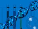 DNA Molecular Model Showing Weak Hydrogen Bond Between the Bases Photographic Print by Carol & Mike Werner