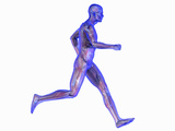 Runner, Male Likeness Showing Musculature and Skeleton Photographic Print by Carol & Mike Werner