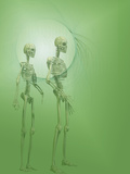 Biomedical Illustration of Human Male and Female Skeletons Photographic Print by Carol & Mike Werner
