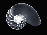 X-Ray of a Chambered Nautilus Shell Fotografisk tryk af George Taylor