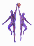 Basketball Players Showing Musculature and Skeletons Photographic Print by Carol & Mike Werner