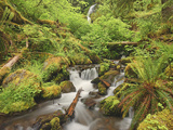 New Spring Growth and a Cascading Creek in the Hoh Rainforest, Olympic National Park, Washington Photographic Print by Geoffrey Schmid